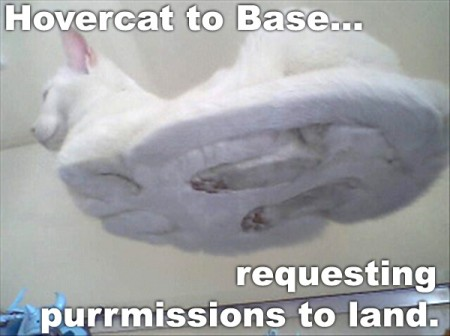 About Hovercat - The name is a meme.  Hovercat to base...  requesting purrmissions to land.